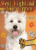 West highland white terrier - Gazdiképző kisokos - Gazdiképző kisokos