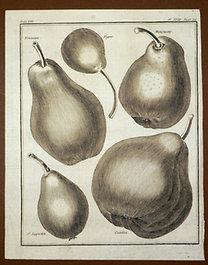 Sellier, F. N.: Choix de Plantes...: Tonneau., Vigne., Masuette., St. Augustin., Catillac.