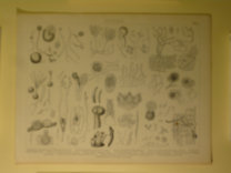 Brockhaus Bilder-Atlas: Botanik Taf. 5.