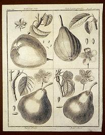 Sellier, F. N.: Choix de Plantes...: Bellissime d'Ete., Verte Longue panachee., Muscat Alleman., Royale d'Hyver.
