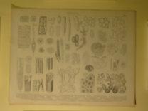 Brockhaus Bilder-Atlas: Botanik Taf. 1.