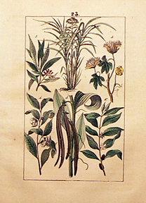 Martin, F.: Naturgeschichte Taf. 23.
