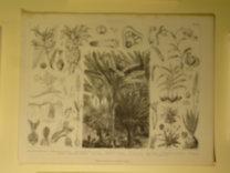 Brockhaus Bilder-Atlas: Botanik Taf. 12.