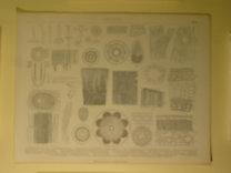 Brockhaus Bilder-Atlas: Botanik Taf. 2.