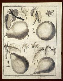 Sellier, F. N.: Choix de Plantes...: Ben Chretien d'Eté Musque., Doyenné., St. Germain., Pastorale.