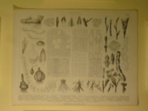 Brockhaus Bilder-Atlas: Botanik Taf. 3.