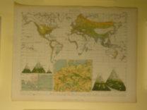 Brockhaus Bilder-Atlas: Botanik Taf. 31.