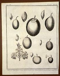 Sellier, F. N.: Choix de Plantes...: Iste verte., Danne Aubert., Diaprée blanche., Diaprée rouge.