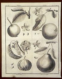 Sellier, F. N.: Choix de Plantes...: Lansac., Robine., Double Fleur., Poire de Naples.
