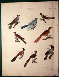 Bertuch - Schmuzer: Bilderbuch für Kinder...: Vögel XI. - Madarak