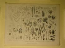 Brockhaus Bilder-Atlas: Botanik Taf. 4.