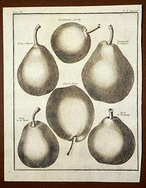 Sellier, F. N.: Choix de Plantes...: Bergamotte Cadette., Epine d'Hyver., Bergamotte de Soulers., Poire de Vitrier., Bezy de la Motte.